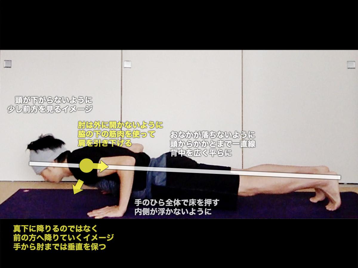 チャトランガダンダーサナ(4点で支える杖のポーズ)〜体幹を強化、二の腕をシェイプアップ〜