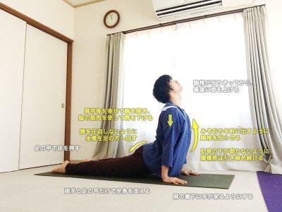 アップドッグ(上向きの犬のポーズ・ウルドゥヴァムカシュヴァナーサナ)〜体幹の強化とコントロール、背骨の柔軟性〜