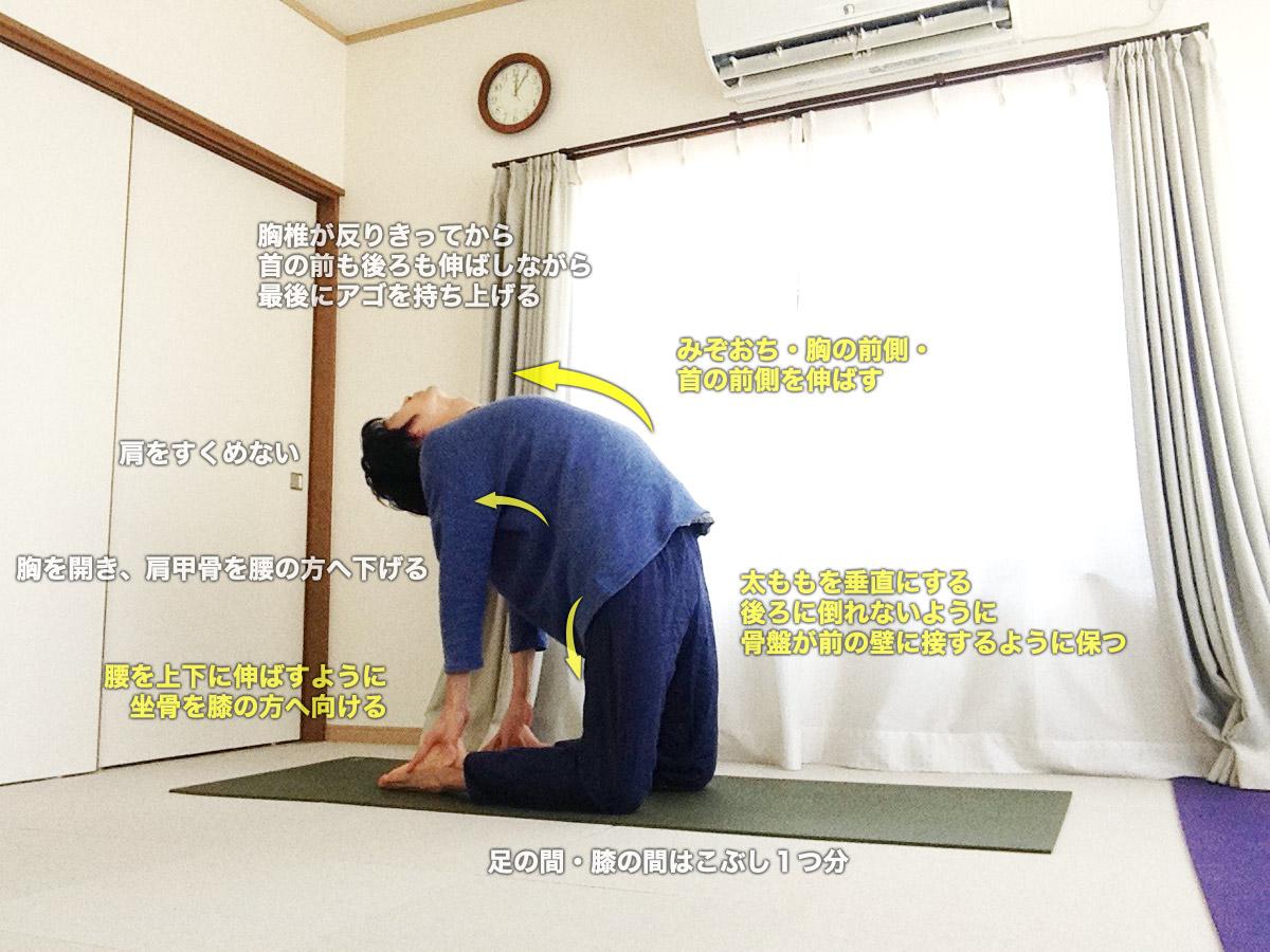ウシュトラーサナ(ラクダのポーズ) 〜体幹を使って、重力とうまく付き合いながら胸を開く〜