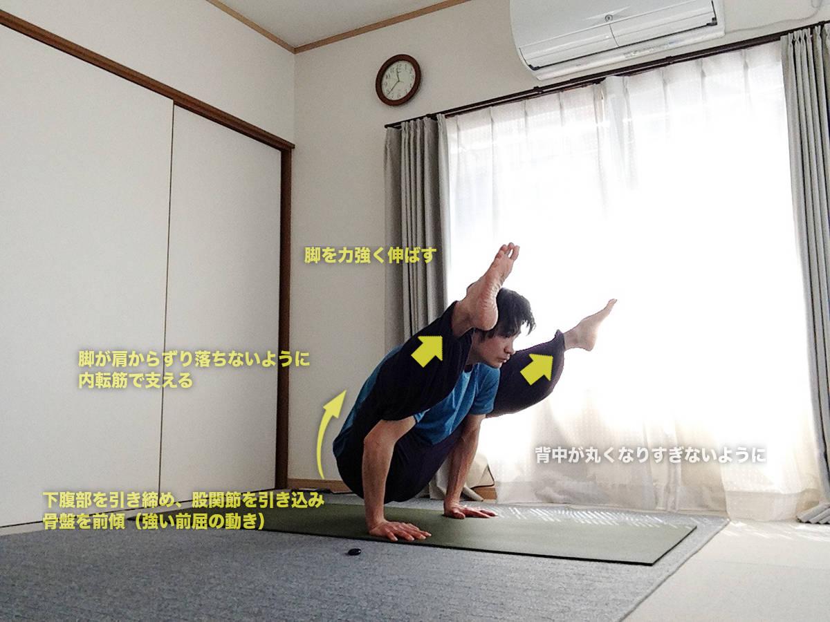 ティッティバーサナ(ホタルのポーズ)〜前屈と股関節の柔軟を高め、肩を正しい配置に〜