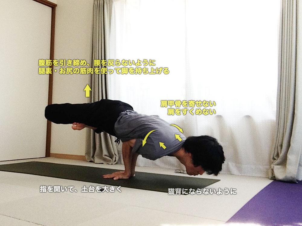 パドママユラーサナ(蓮華座を組んだ孔雀のポーズ)〜内臓を活性化・体幹強化・股関節を柔軟に〜