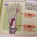 足の親指から学ぶ、部分と全体の話